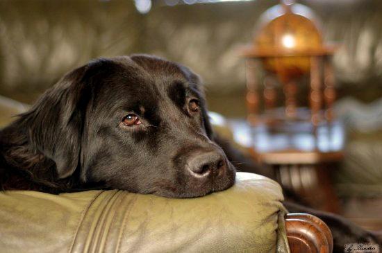 Собаки и щенки в Новосибирске продажа Фото и цены  НГС