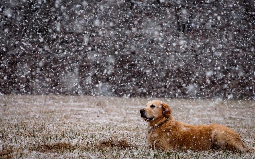лабр и снег