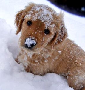 щенок в снегу
